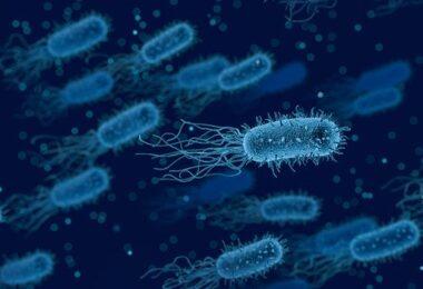 Botulismo Bacterias