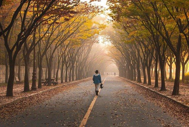 Power walking bosque